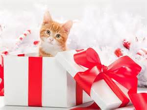 Cat Protecting Presents Video