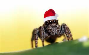 Christmas Tree Defender » What? Christmas Spiders Fact ...