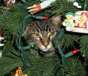 Good Cat Proof Your Christmas Tree!