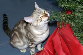 Cat Eating Pine Needles From Christmas Tree